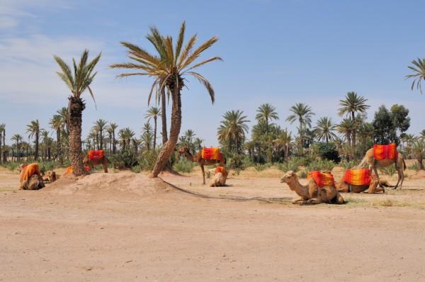 La_Palmeraie_de_Marrakech_709