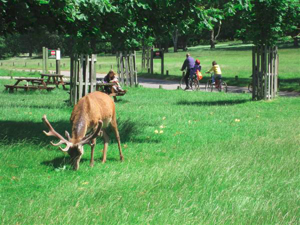Richmond-Park-Londres-TourDuMonde_FR-6