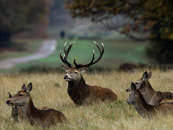 Richmond-Park-Londres-TourDuMonde_FR-7