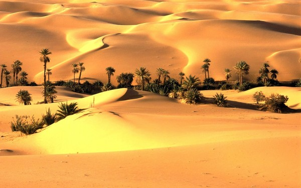 Thar-Desert-India