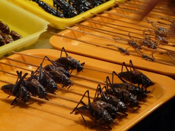 Wangfujing-market-insectes-pekin-2