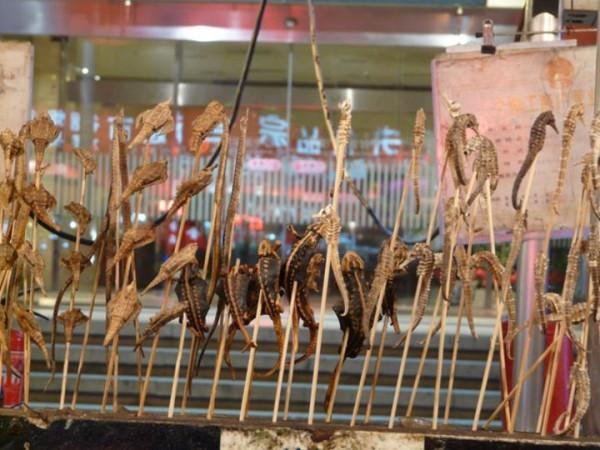 Wangfujing-market-insectes-pekin-5