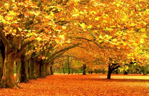 mont-royal-automne-montréal